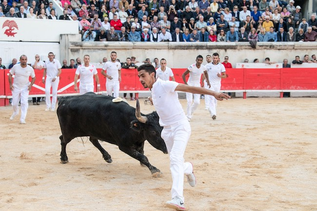 Près de 800 courses camarguaises par an qui attirent plus de 350 000 spectateurs.  © Laurent Boutonner Région Occitanie